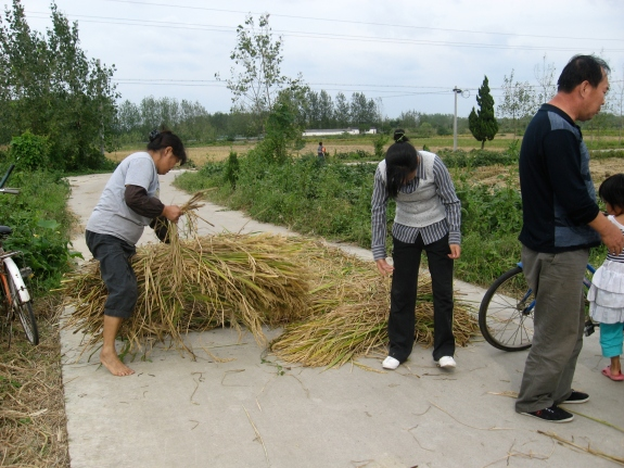 Julie's Mom, Dad, and cousin laying the rice out on the road to be flattened by passing cars.